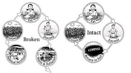 Nutrient Cycle - Broken and Intact