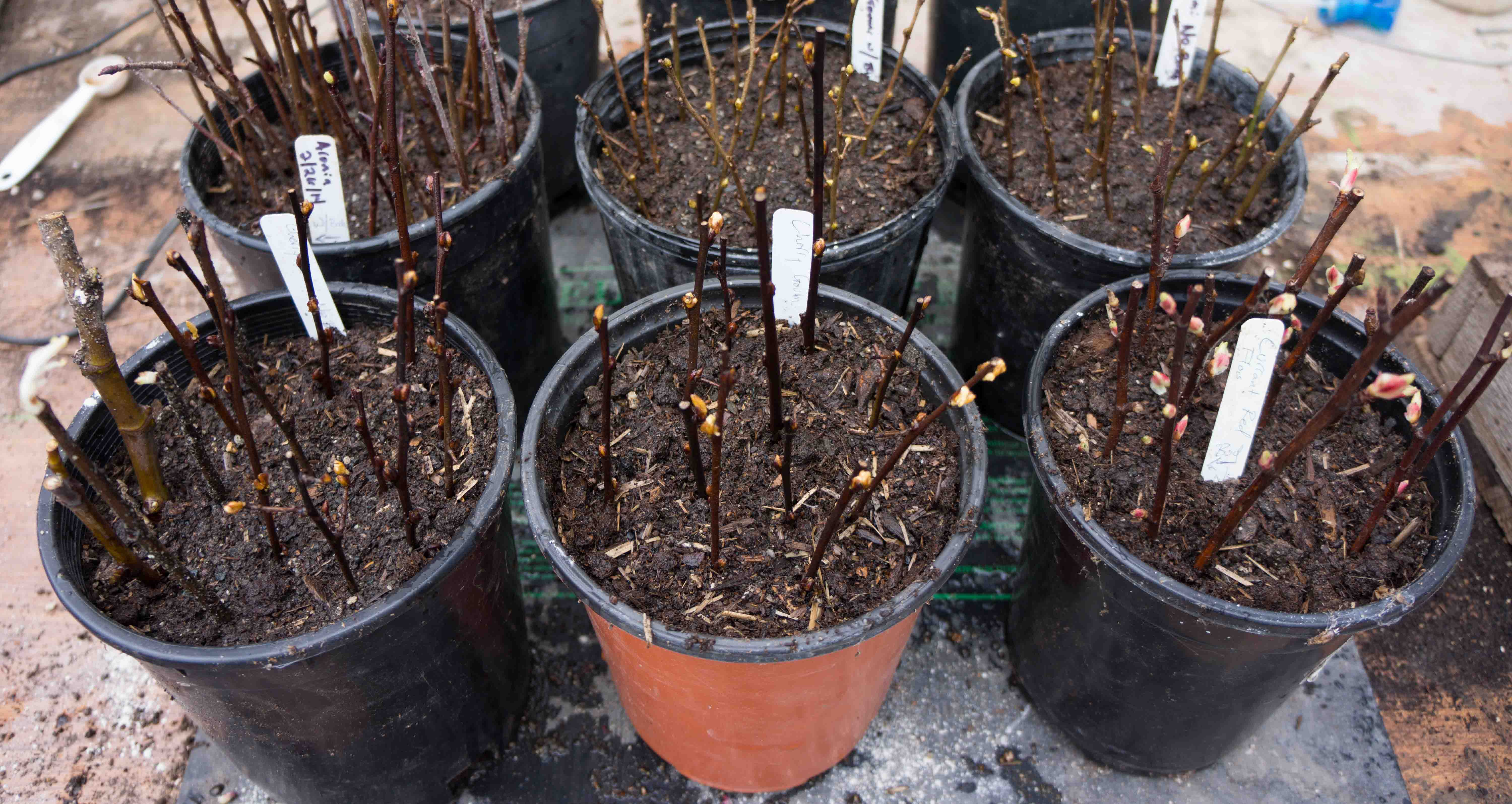 Basic Plant Propagation – Part 2