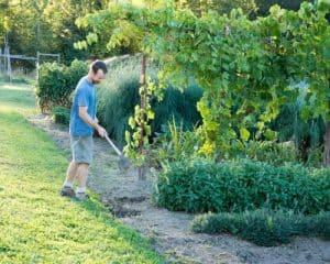 Gardening Hoe 2 - Matt Smiling