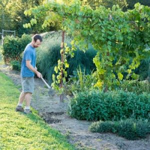 5 Tips for Using a Gardening Hoe